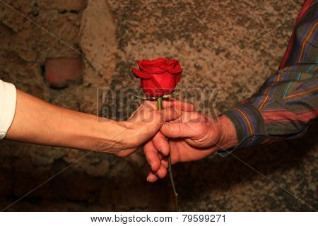Hands Giving A Red Rose
