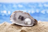 foto of scallop shell  - Shell with a pearl on a sea sand - JPG