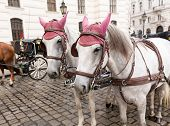 picture of carriage horse  - Pair of horses and carriage in front of the Hofburg Palace in Vienna Austria - JPG