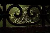 picture of cobweb  - The spider web  - JPG