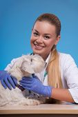picture of working-dogs  - I care. Young beautiful vet bonding to a cute little white dog and looking at camera while sitting at her working place against blue background