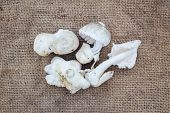 picture of edible mushroom  - Edible mushrooms on old and dirty gunnysack - JPG