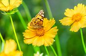 picture of butterfly flowers  - Beautiful butterfly on the bright yellow flower - JPG