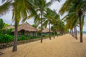 pic of guest-house  - guest houses among palm trees Southern Vietnam - JPG
