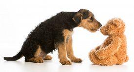 foto of stuffed animals  - cute puppy reaching out to kiss stuffed teddy bear  - JPG