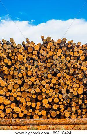 Pine Timber At Lumber Yard