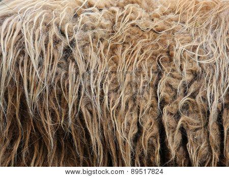 sheep fur.