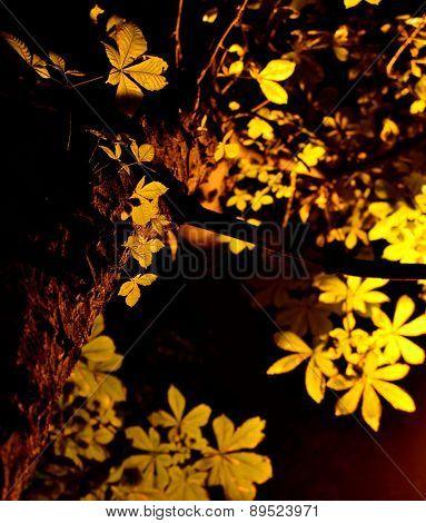 ?hestnut tree in the dark
