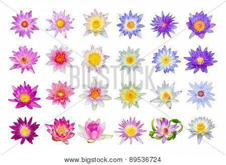 Water Lily Or Lotus Flower Set 24-1