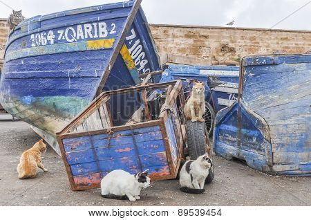 AS-SAWIRA, MOROCCO, APRIL 7, 2015: Homeless cats gather in port waiting for some  fish leftovers