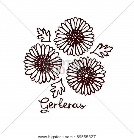 Handsketched bouquet of gerberas