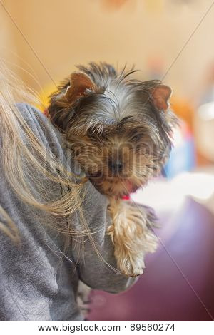 Girl child with a puppy Yorkshire Terrier
