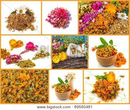 Healthy Life Collage. Rose, Chamomile, Marigold