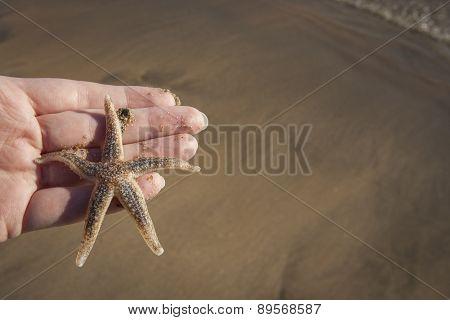 Hand Holding A Starfish
