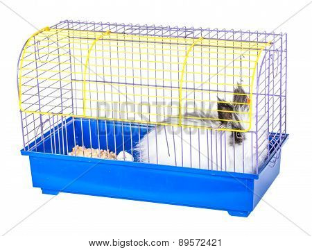 Decorative Rabbit In A Cage