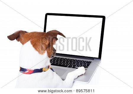 Dog Computer Pc
