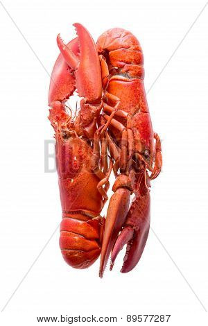 Loving Red Lobsters Isolated On White Background