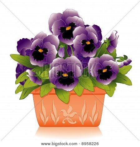 Pansies in Planter