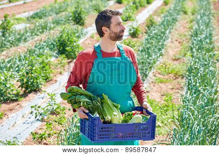 Farmer man harvesting vegetables in Mediterranean orchard field