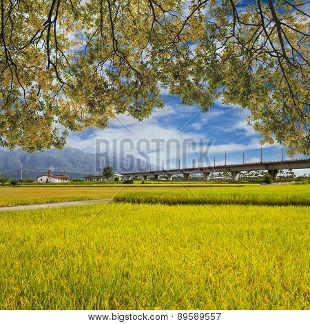Landscape Of Paddy Farm Under Blue Sky In Hualien