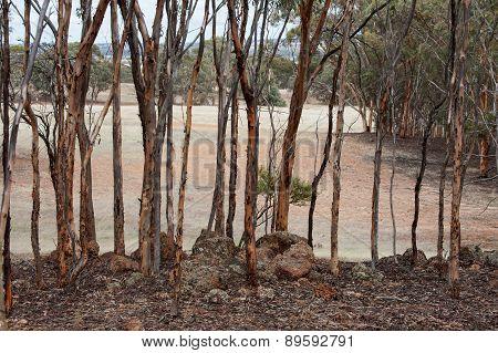 Mallet Woodland