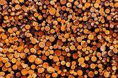 pic of piles  - Pile of Lumber - JPG