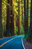 stock photo of redwood forest  - Redwood Forest Highway in California United States - JPG