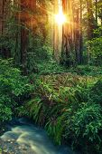 stock photo of redwood forest  - Redwood Place of Mystery - JPG
