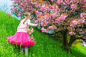 stock photo of tutu  - Sweet little girl posing next to a japanese cherry tree in full blossom - JPG