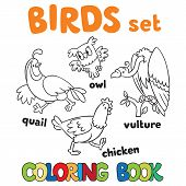 picture of quail  - Coloring book or coloring picture with birds - JPG