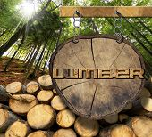 foto of lumber  - Trunks of trees cut and stacked and wooden sign with text lumber hanging with metal chain on a wooden pole with green forest in the background with sun ray - JPG