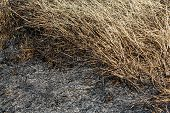 stock photo of ashes  - Close up black color ash after burned grass in field - JPG