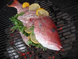 stock photo of red snapper  - Fresh caught red snapper with lemon and parsley on the grill  - JPG