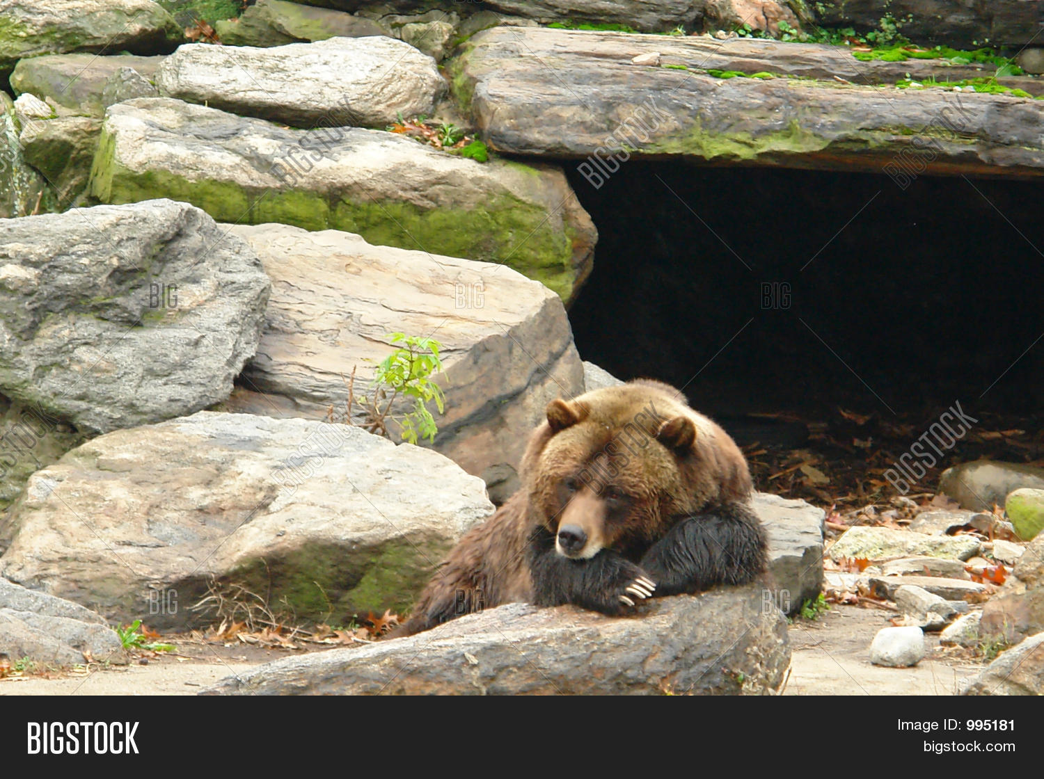 Bear Sleeping Outside Cave Stock Photo & Stock Images ...