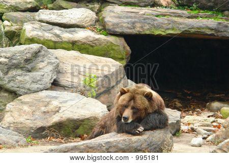 Bear Sleeping Outside Cave
