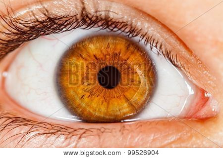 Photo Human eye close-up.
