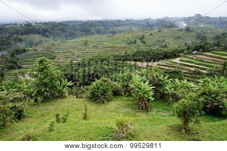 Rice Terraced Paddy Fields In Central Bali, Indonesia