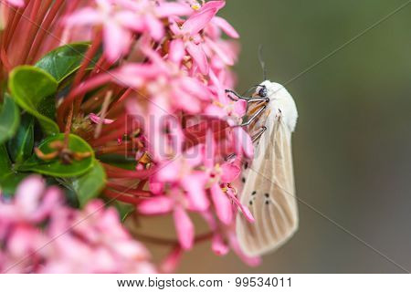 Moth On Flower