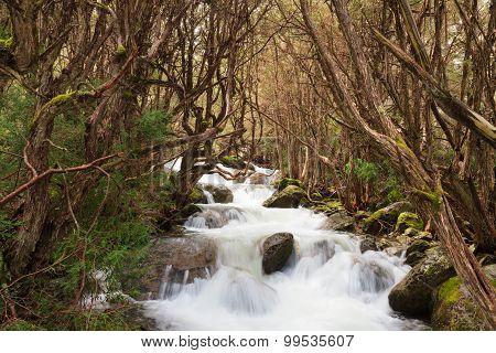 Pristine Alpine Stream