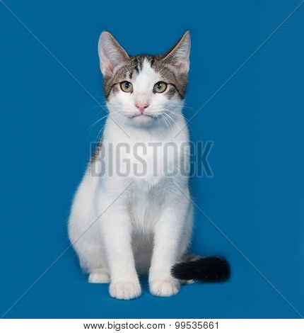 White And Gray Kitten Sitting On Blue
