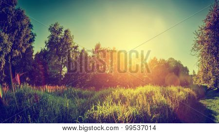 Green sunny landscape, countryside panorama. Trees, bush, grass. Vintage mood