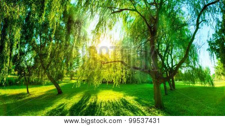 Panorama of green summer park. Sun shining through trees, leaves. Nature theme