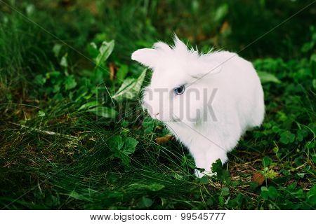 White Funny Bunny Rabbit On Green Grass