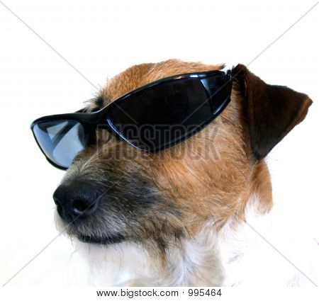 Mr. Cool Dog