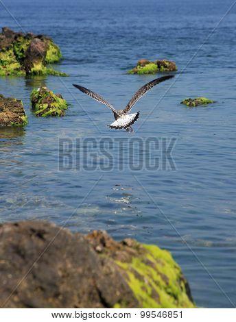 Gull Above Sea