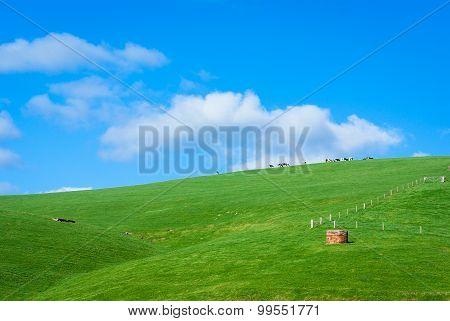 Hilly Green Farmland