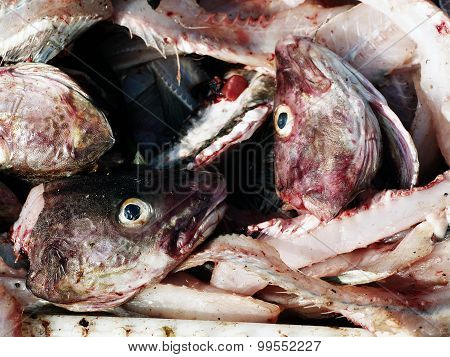 Fish heads and guts
