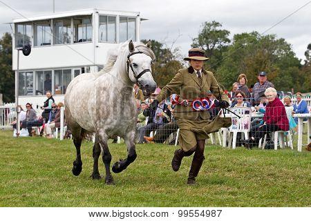 Horse runner