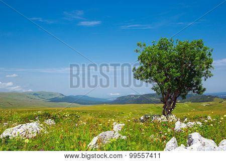 alone tree in green field