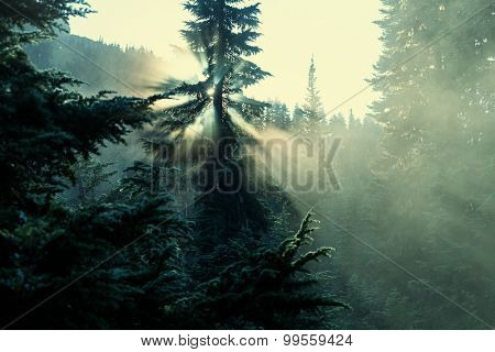 Sunbeams in morning summer forest